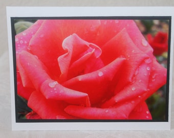photo card, pink Rose photograph