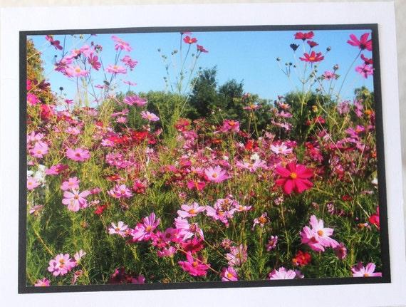 Photo Card, flower garden, pink, cosmos