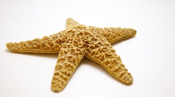 Pacific Starfish/Sea Star
