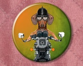 "Doxie Danger Dachshund on a Motorcycle - Pinback Button Badge -  2.25"" Two Inches"