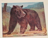 Vintage Grizzly Bear and Elephant Illustration Book Plate From Natural History Book - Great for Framing