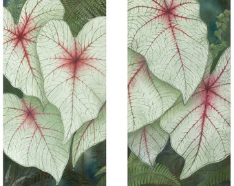 Caladiums in the Shade Fine Art Print