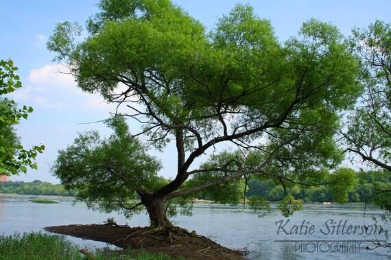 SALE James River Tree, Richmond Virginia Landscape Water Photo Art, Framed Photography Option