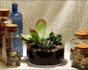 Another World Succulent Centerpiece in Shallow Glass Bowl
