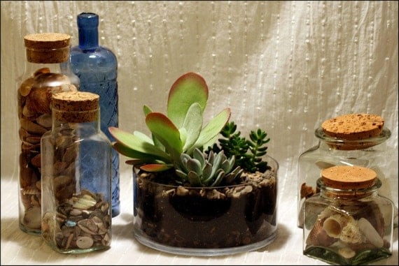 Items similar to another world succulent centerpiece in