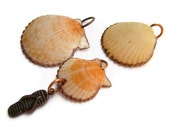 TWENTY CENT SPECIAL - Beachy Peachy Scallop Seashell from Florida - Drilled with Copper Flip Flop Charm and Copper Jumprings for Supply