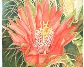 Cactus Flower, Orange, Green, Barrel Cactus - WATERCOLOR/ACRYLIC PAINTING, desert, giclee