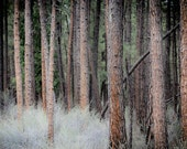 TREES spring, nature photography print