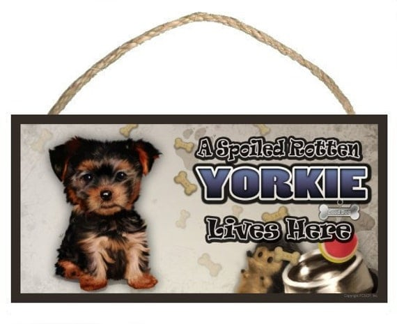 """A Spoiled Rotten Yorkshire Terrier (puppy) Lives Here 10"""" x 5"""" Wooden Sign v2"""