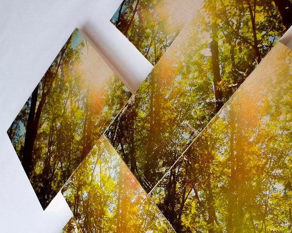 Forest, Peace by Piece - Limited Edition Fine Art Photo Transfer on Wood Panels - by Patrick Lajoie