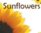 Personalised Etsy shop banner, graphic, and avatar set personalized premade - Sunflowers