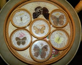 Vintage REAL PRESSED BUTTERFLY and Colorful Pressed Leaves and Lace Glass Coaster and Tray Set