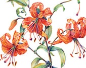 Set of 4, Tiger Lily Gallery style greeting cards, suitable for sending and framing - amberRturner