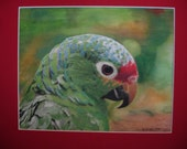 Parrot Water Color Painting, mixed Media Watercolor, pencil crayon, ink mounted 11 x 14