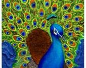 Peacock Painting, Animal Art, Children's Room, Home Decor, Peacock, Original Fine Art 11x 14 Painting, Wall art, Nature,Animal Lover,Nursery