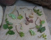 Baker's Dozen Succulent Cuttings//13 Small Succulents//Drought Tolerant Plants//WEDDING FAVORS//Hostess Gift