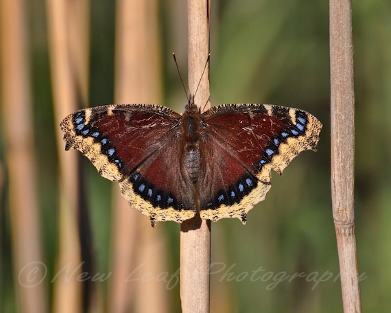 Brightly colored Butterfly - Blue, brown, yellow, nature photography