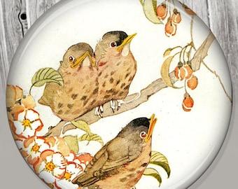 Vintage Bird Pocket Mirror, Photo Mirror, Compact Mirror of Antique Illustration Image A93