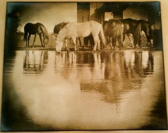 Max Thorek Photo, Sepia Toned, Silver Gelatin Print,  Horses, Circa 1937
