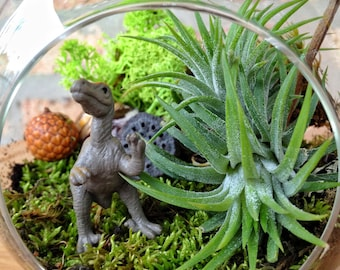 Childrens Dinosaur & Moss Terrarium - You pick the dinosaur  - A Perfect Birthday Gift
