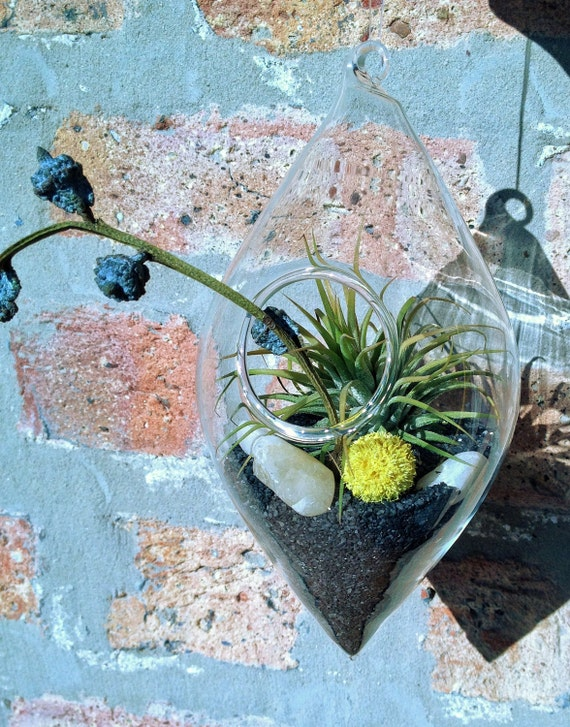 Teardrop Hanging Glass Air Plant Terrarium - A Perfect Birthday Gift - DON'T FORGET to add a CHARM