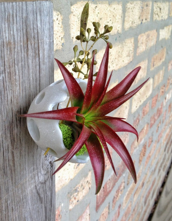Modern design air plant wall art for Air plant art