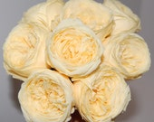 Preserved Garden Roses - Multiple Colors Available