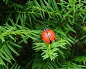 Elizabeth the Ladybug Nanocache GEOCACHE