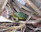 Henry the Turtle Geocache Microcache