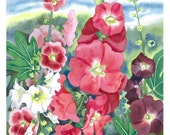 Hollyhocks - botanical flower Limited Edition Giclee fine art print