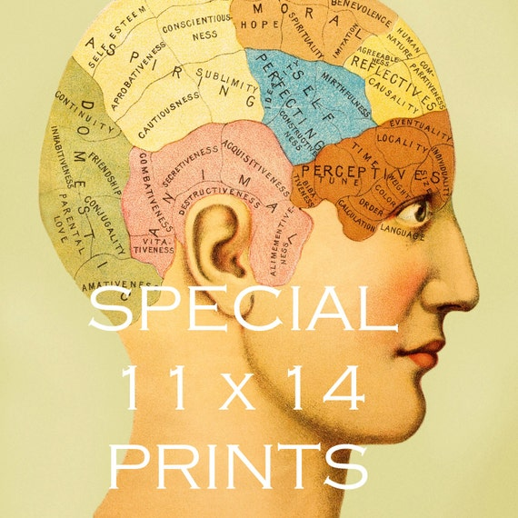 PHRENOLOGY - SPECIAL - 11x14 on Matte Paper - Restored Vintage 1900's Mental Map - Medical Illustration