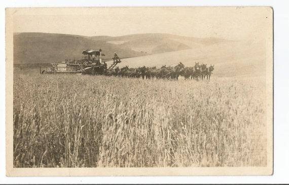 RPPC harvesting wheat w horses real photo postcard