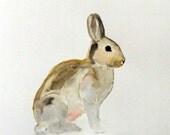 Original Watercolor Painting-Silver Bunny