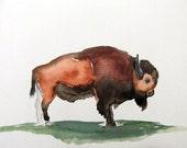Original Watercolor Painting-Bison