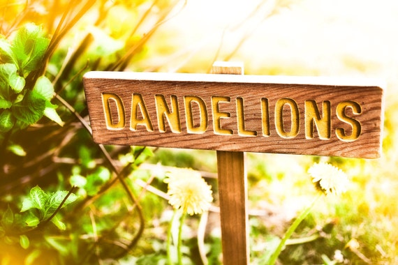 DANDELIONS Garden or Yard Sign, Painted & Oil Sealed Cedar Wood: Hand Routed, Yellow Happy Sign, Plant Marker