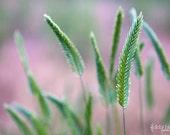 Green Grass Pink Nature 8x10 Fine Art Photograph -Home Decor