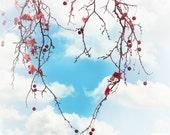 Spring Sky Tree Branches Leaves -Heart Love Nature Abstract - Fine Art Photograph -Orange Blue White -  Home Decor  -Fine Art Print