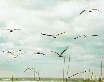 Seagulls Flying Birds Seaside Sky  - Nature Photography Scenic - Home Decor Fine Art Print - Turquoise Cyan