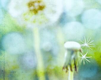 Spring Dandelion Nature Botanic & Bokeh -Blue Green Cyan Textured -Photograph -Home Decor Fine Art Print Wall Art