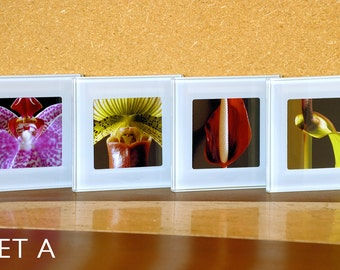 Fine Art Photography Nature Glass Coasters