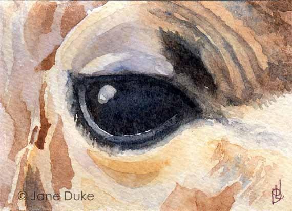 Giraffe Eye ACEO Watercolour Original Painting