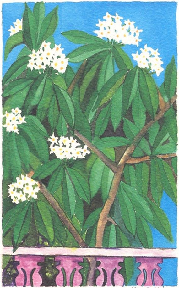 Plumeria/Frangipani, Yellow Cottage, Paradise View, Roadtown Prints
