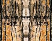 Archetype Images photos.