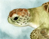 Green sea turtle watercolor painting