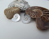 Ammonite Silver Earrings