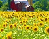 "Jigsaw Puzzle ""Sunflower Barn"" 16x20 500 pieces"