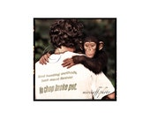 Young chimpanzee image. Animal photo with keeper. Square wildlife portrait. Primates sanctuary in Africa. 7x7 inches. Cameroon.