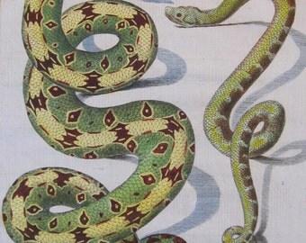 Antique Print 1783 Comte de Buffon 'Histoire Naturelle' Hand Colored Snakes