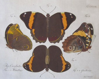 Antique Print 1783 Jablonsky Hand Colored Engraving of Butterflies