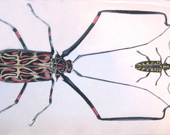 French Antique Lithograph of Exotic Insects Handcolored